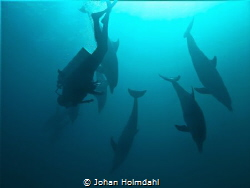 We went to dive the wreck of Hamata in the Red Sea. Inste... by Johan Holmdahl