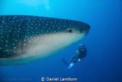 A magic moment a few years ago. This beauty appearing as ... by Daniel Lamborn