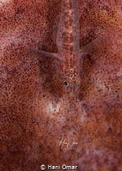 Always impressed with the way marine creatures can camouf... by Hani Omar