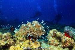 Coral reef formations in Mon Choisy Mauritius. by Jean-Yves Bignoux