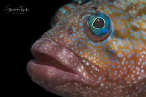 funny Fish, La Paz Mexico by Alejandro Topete