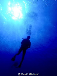 A diver makes a slow descent in the waters of the Roatan ... by David Gilchrist