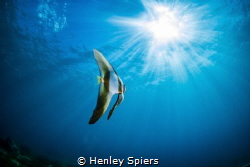 Chasing the Light by Henley Spiers