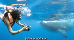 Snorkeler and Whale Shark by Daniel Waldman