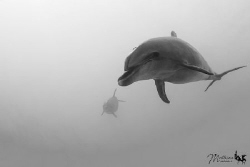 Friendly daulphin by Mathieu Macias