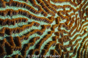 The building blocks of a coral reef by Peet J Van Eeden