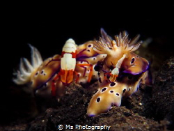 How different species under water cooperate always leaves... by Ms Photography