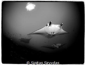 Squadron by Sigitas Sirvydas