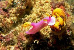 one of my favorites underwater : nudis! this shot was ta... by Mona Dienhart