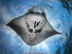 Manta Rays are by far my favourite animal, so this was a ... by Ms Photography
