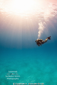 """Where's The Wreck?""- A diver hovers in sunbeams over emp... by Susannah H. Snowden-Smith"