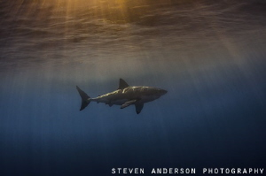 The twilight hour and Great White Sharks...doesn't get be... by Steven Anderson