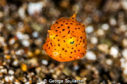 Yellow speck!!! by George Touliatos