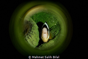 Clownfish in green. by Mehmet Salih Bilal