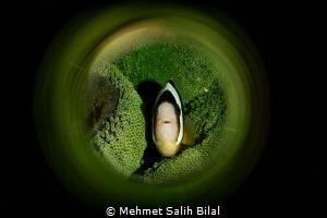 Clownfish in green. by Mehmet Salih Bilal