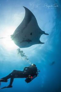Divers with Mantaray, Roca Partida México by Alejandro Topete