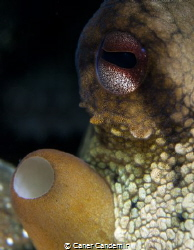 Octopus eyes by Caner Candemir