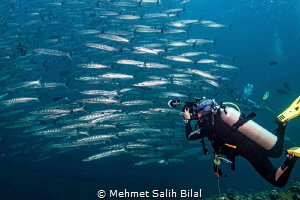 Barracuda shoal and the photographer. by Mehmet Salih Bilal