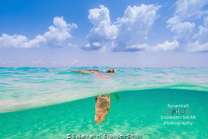 """Deep Breaths"" - A green sea turtle breaths at the surfac... by Susannah H. Snowden-Smith"