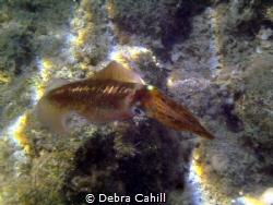 Squid Marmaris Turkey by Debra Cahill