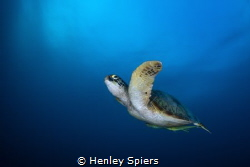 Green on Blue by Henley Spiers