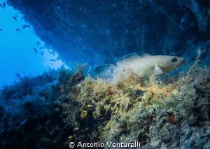 shotted in Tyrrhenian Sea , Italy by Antonio Venturelli