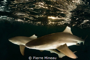 With a compact camera and wet lens, one is not able to do... by Pierre Mineau