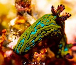 green machine by John Loving