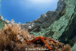 Seastar on stone with blue sky by Caner Candemir