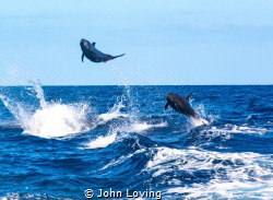 Dolphin show on the way back in. by John Loving