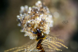 I am not sure which nudibranch it is but I guess its from... by Hani Omar