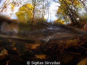 Autumn stream by Sigitas Sirvydas