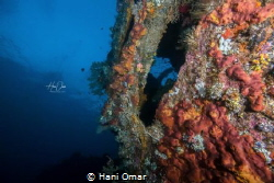 This was taken in Tulamben in the USAT Liberty ship wreck. by Hani Omar
