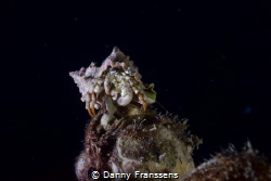 During nightdive, I wasn't going for crab's but couldn't ... by Danny Franssens