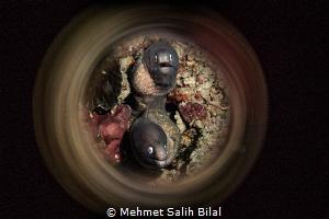 Double moray eel. by Mehmet Salih Bilal