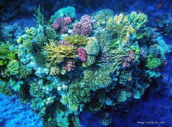 Coral reefs of the Red Sea. by Sergey Lisitsyn