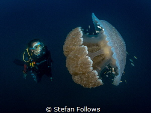 """""""We didn't come here to fight with monsters ...""""  Jelly... by Stefan Follows"""