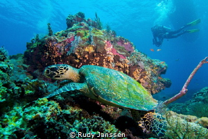 VIEW WITH A TURTLE by Rudy Janssen