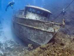The Mr. Bud. Roatan, Bay Islands. Fuji F810, Inon WAL, am... by Jennifer Temple