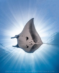 Travel Safely Mantas by Nick Polanszky