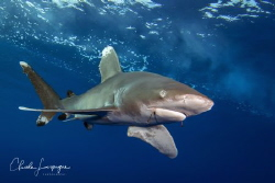 Longimanus with two hooks by Claude Lespagne