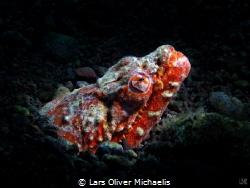 reptilian snake eel (Brachysomophis henshawi) nightdive,... by Lars Oliver Michaelis
