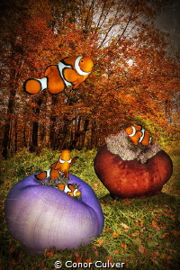 """""""Anemones In the Fall"""" part of my Underwater Surrealism b... by Conor Culver"""