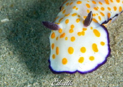 Nudibranch by Eduard Bello
