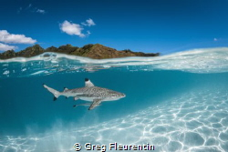 Black tip shark and the lagoon of Moorea by Greg Fleurentin