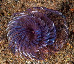 Spirals!!! by George Touliatos