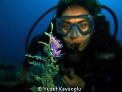 Nudibranch in Bodrum by Yusuf Kayaoğlu