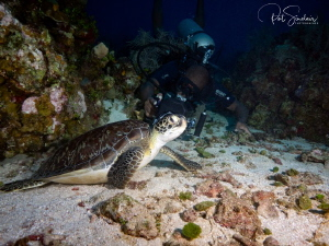 Louis was filming green sea turtle (who was so cooperative) by Patricia Sinclair