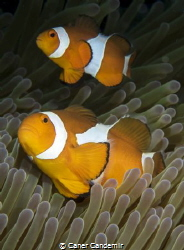 Nemo by Caner Candemir