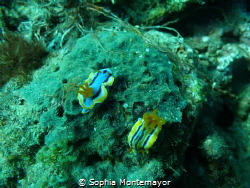 It was my second dive... I saw a nudibranch as I was abou... by Sophia Montemayor